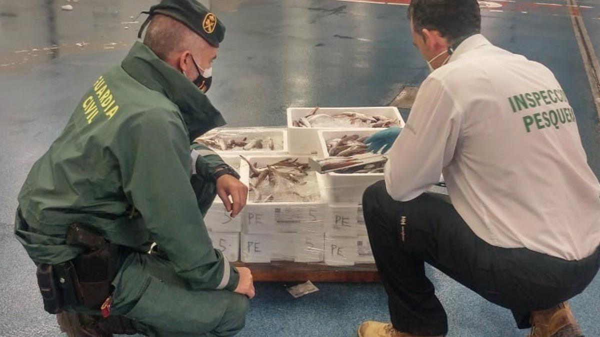 Guarromán merluza guardia civil seprona