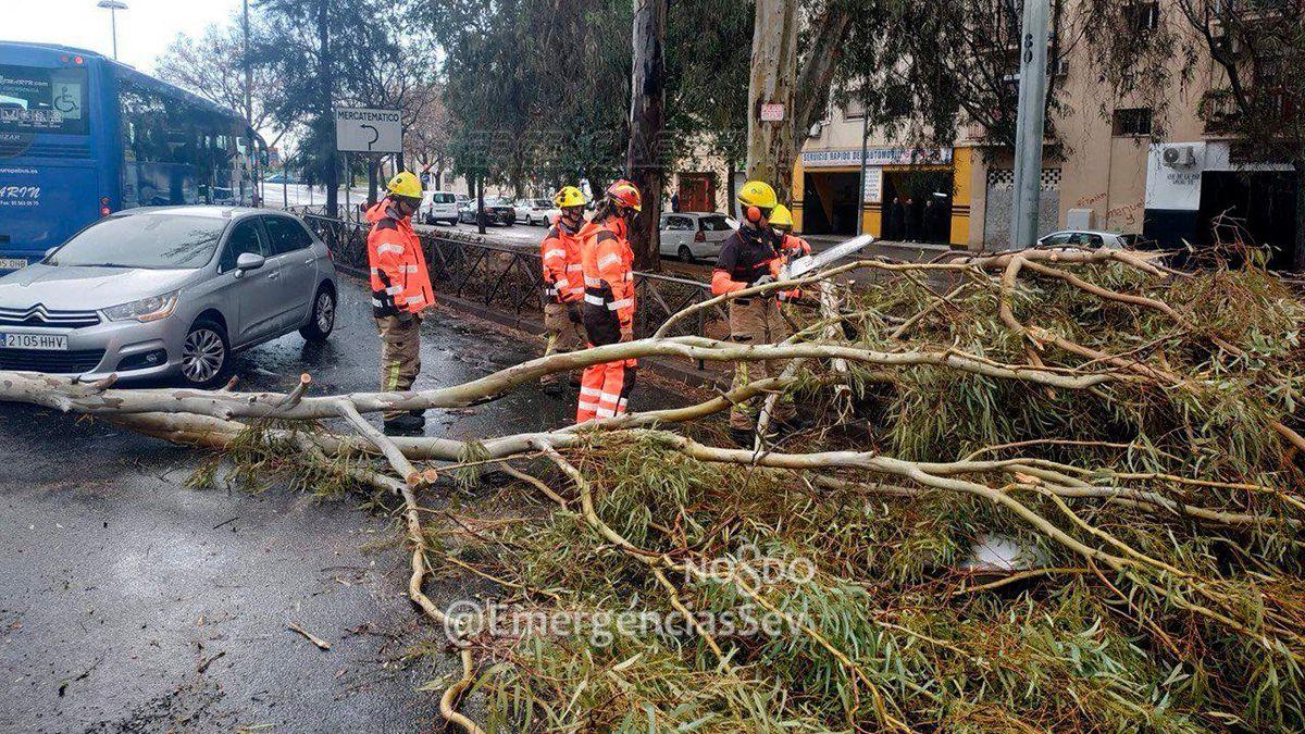 Andalucía, temporal caída, árboles