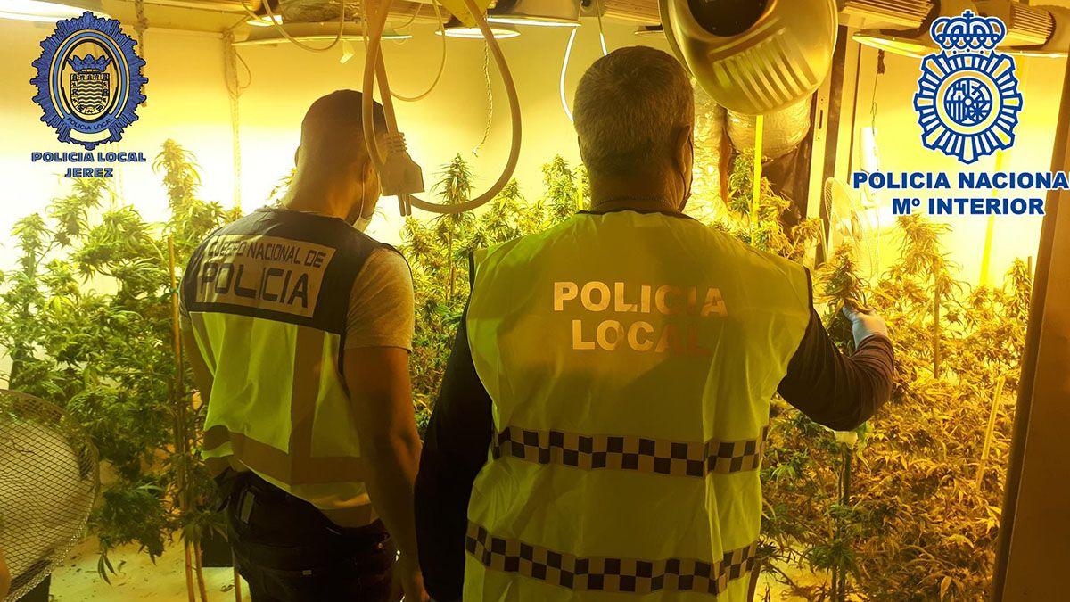 Plantación de marihuana en la barca