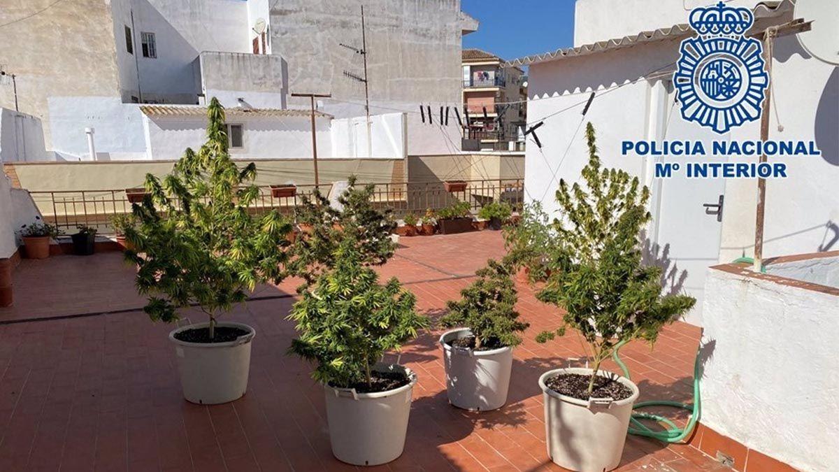 marihuana terraza colegio granada