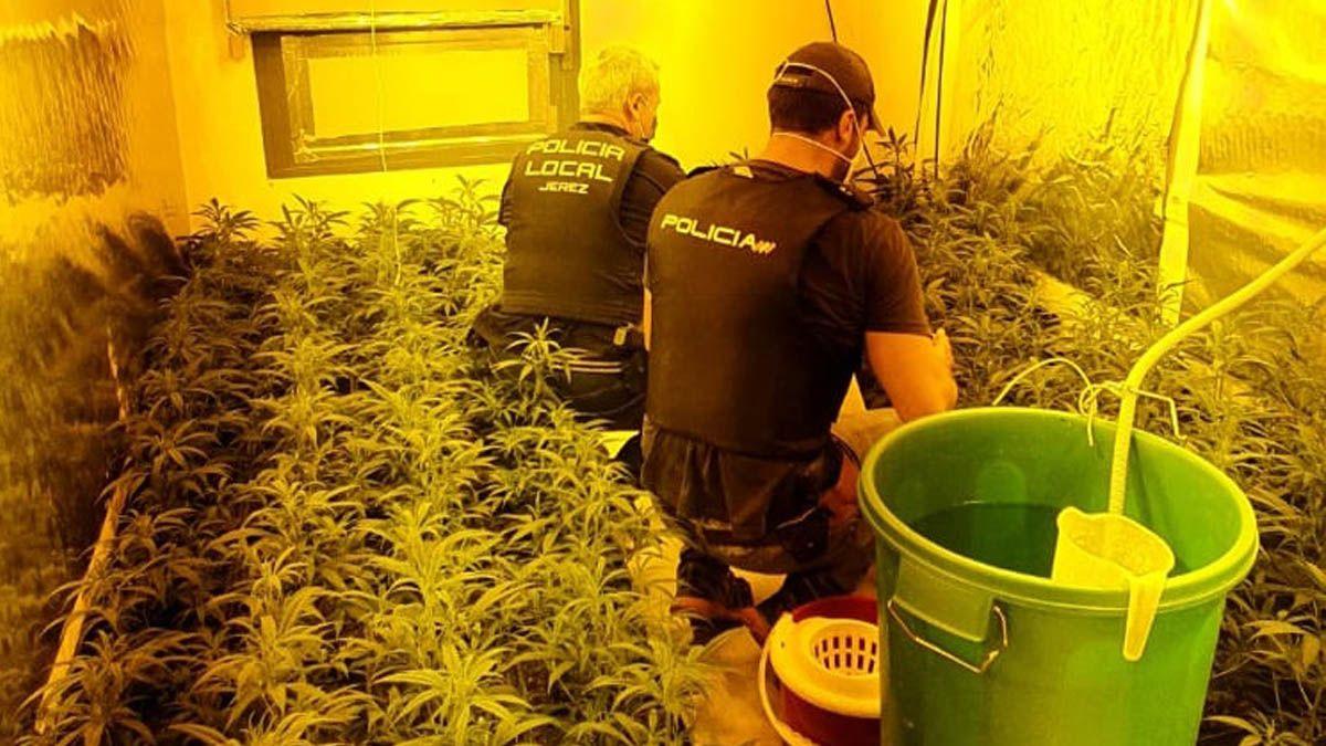 marihuana pisos jerez