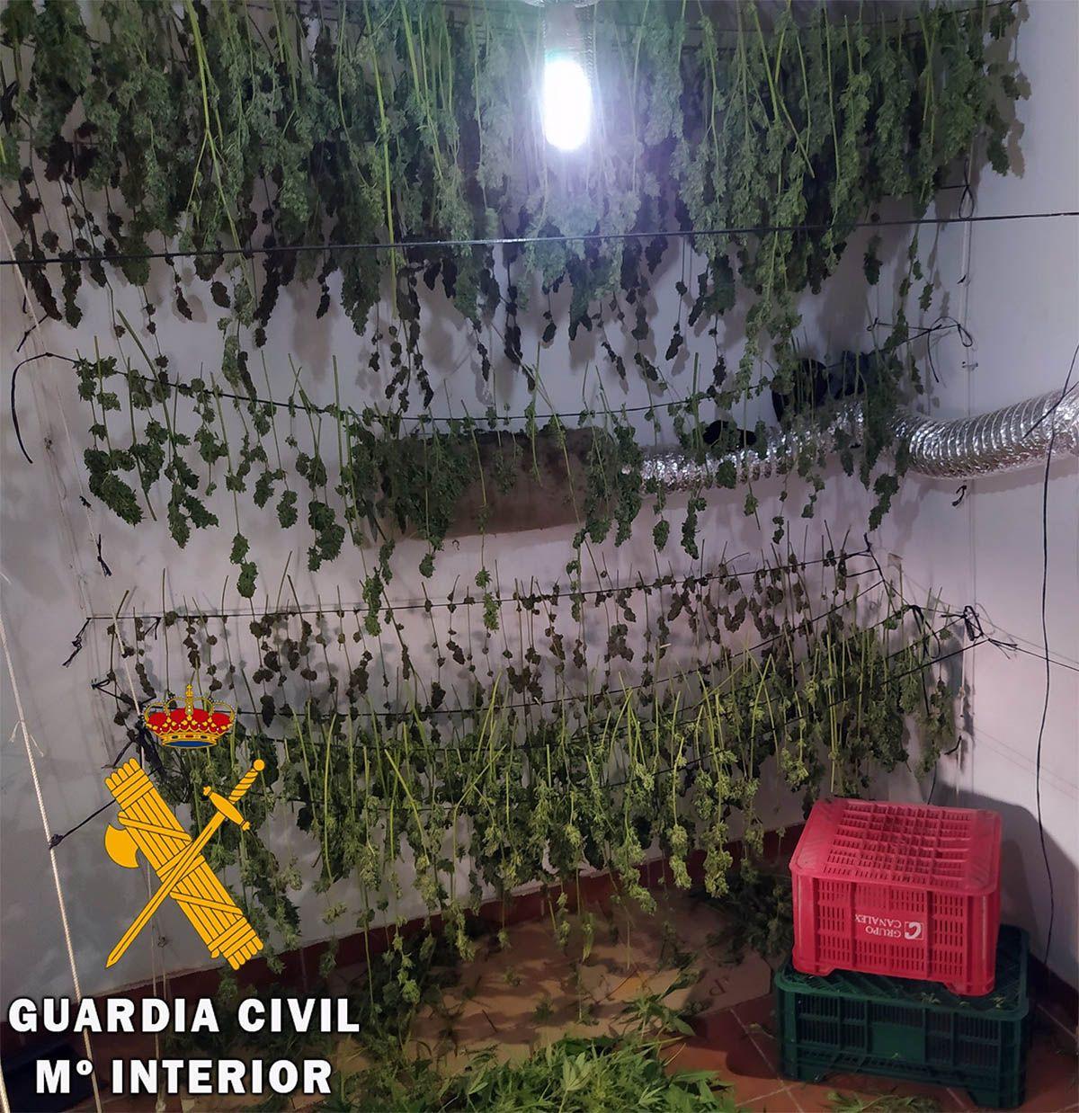 invernaderos de marihuana Almería