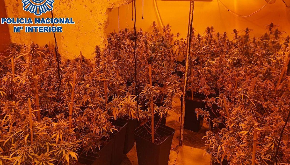 La Línea marihuana casa