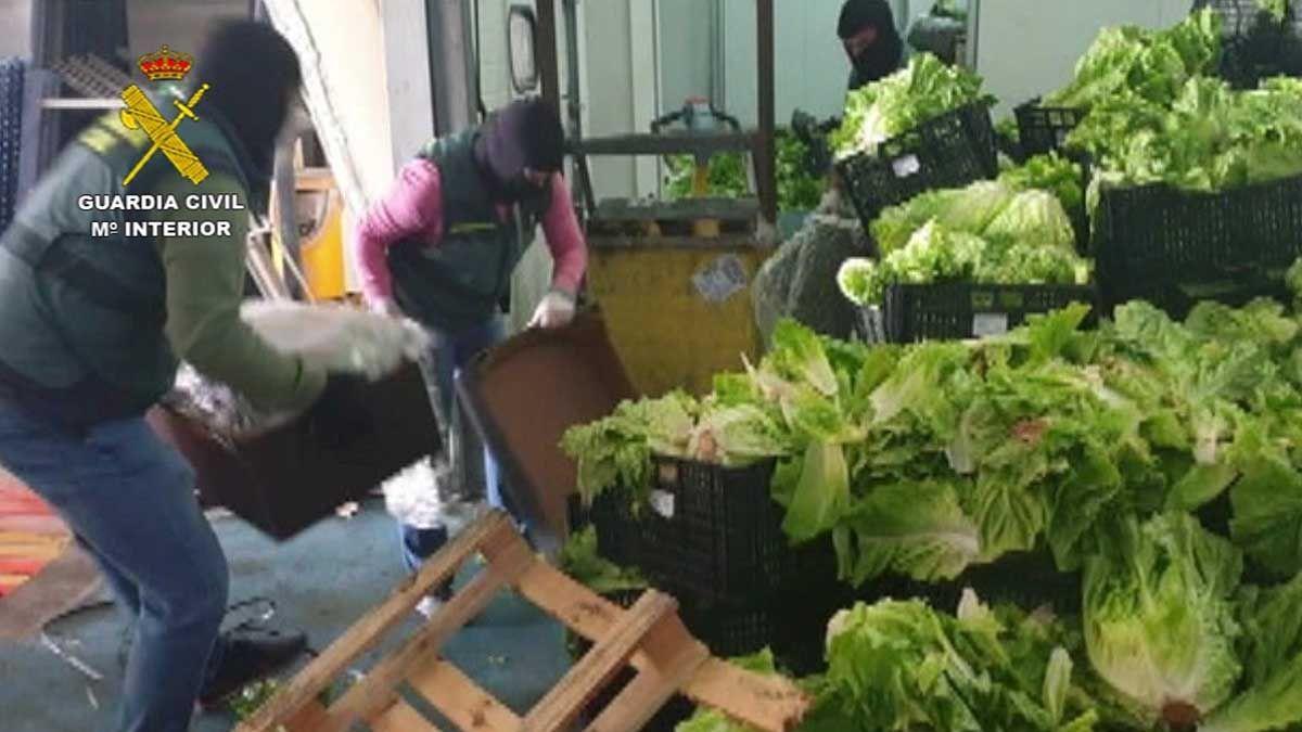 narcotráfico Sevilla droga marihuana