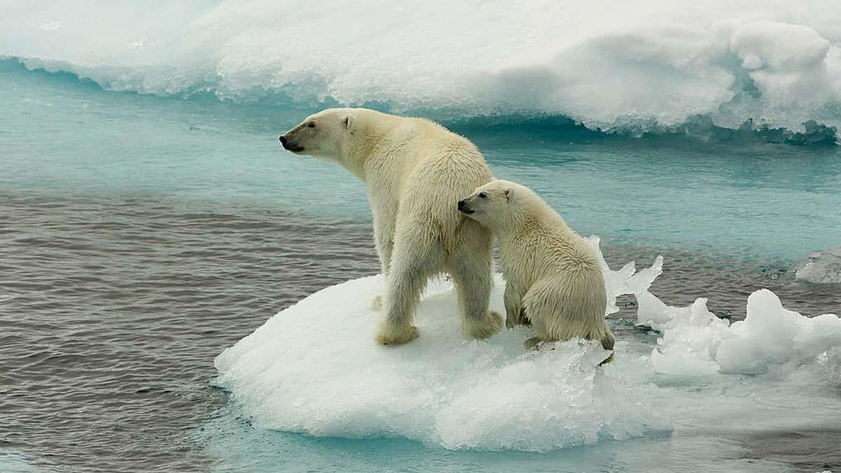 Animales afectados por el calentamiento global